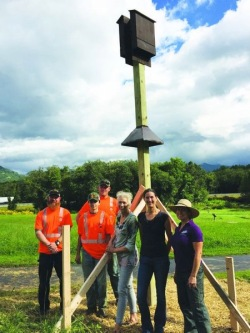 News: Bat boxes at community garden part of art show