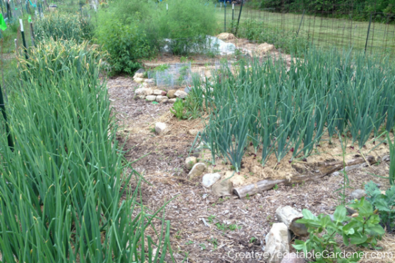 The Best Vegetables to Grow in a Community Garden Plot via The Creative Vegetable Gardener