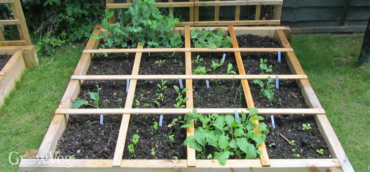 Planting Ideas: Planning a Square Foot Vegetable Garden via GrowVeg
