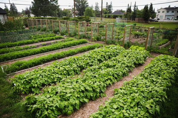 8 Great Tips to Start a Community Garden via Sunset Magazine