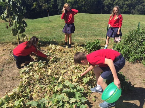 Community garden leads to Gold Award for Scout via Papillion Times