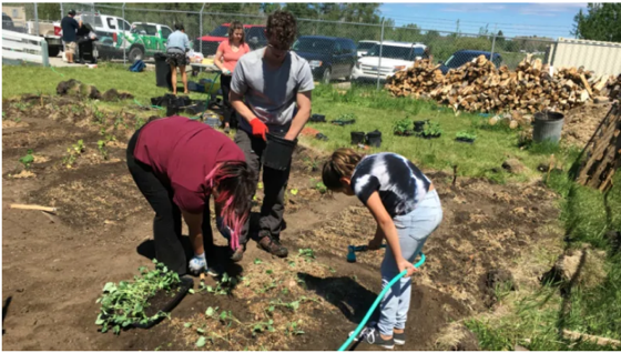 Tsuut'ina green thumbs gather to create community garden for food bank via CBC