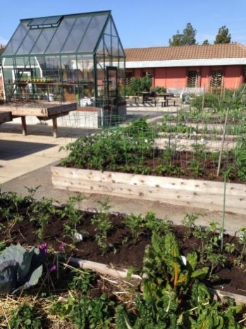 How to Start A Community Garden via Marin Master Gardeners