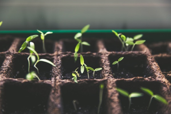 Help us make th  Garden Grow