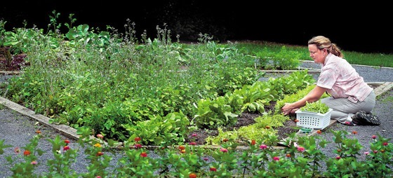 A community garden takes root via the Winchester Star