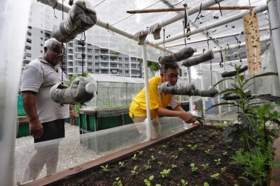 My Turf: Vegetables and friendship blossoming in community gardens via The Straits Times
