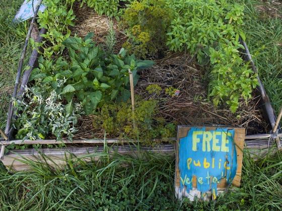 https://www.npr.org/sections/thesalt/2017/08/17/543421360/how-my-little-community-garden-plot-went-from-flop-to-flourish